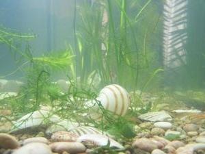удобрение аквариумной водой