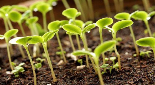 подкормки для растений