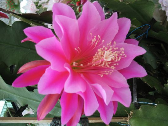 цветы в Далате