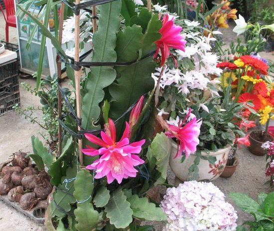 цветы во Вьетнаме
