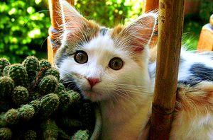 кактус и кот