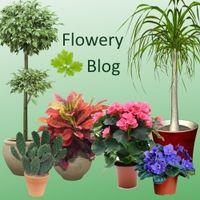 Конкурс: лучший комнатный цветок