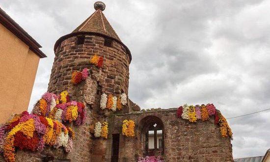 фестиваль хризантем в г. Лаар