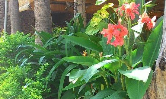 растения вьетнама