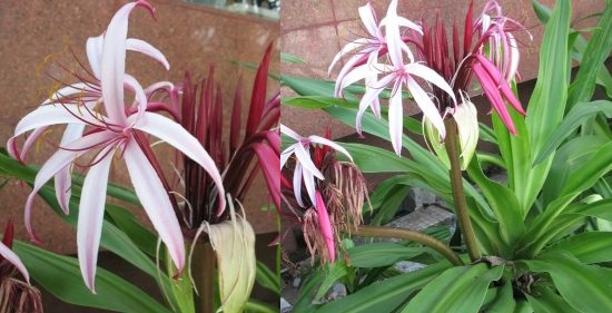 вьетнамские цветы