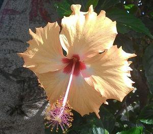 Тропические цветы Вьетнама