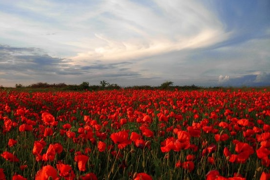 тюльпан легенда о цветке