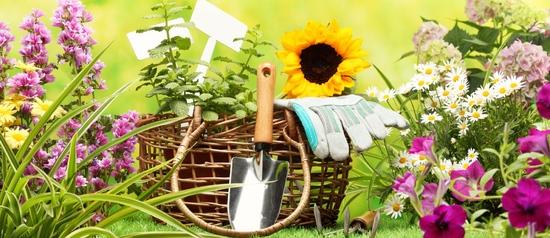 подкормка садовых растений