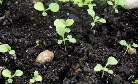 способы размножения комнатных растений 6 класс презентация