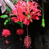 Тропические цветы Вьетнама, продолжение