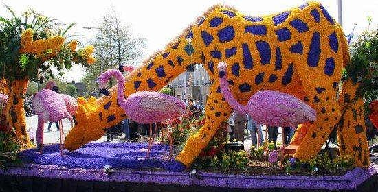 фестиваль цветов в Голландии (2)