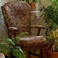 Комнатные растения-фильтры