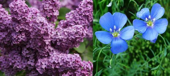 растения для щелочных почв