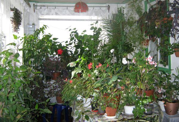 зимний уход за цветами