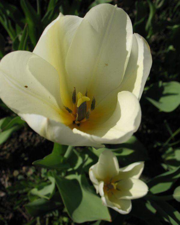 удобрение для луковичных