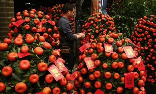 мандарин новогодний