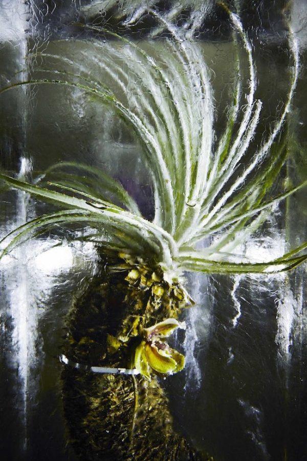 магия цветов со льдом