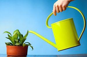 Полив растений миниатюра