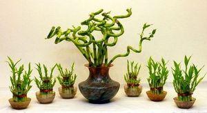 бамбук миниатюра