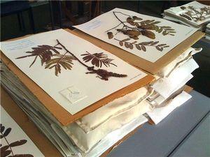 гербарий миниатюра