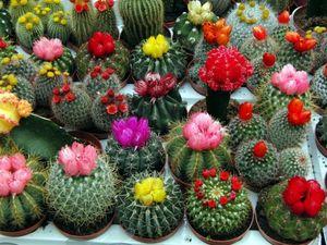 полив кактусов миниатюра