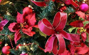 Растения символы Нового года