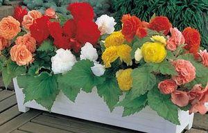 цветы на балконе миниатюра