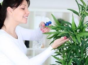 Внекорневая подкормка комнатных цветов