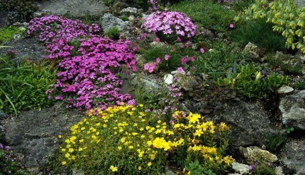 оформление цветника