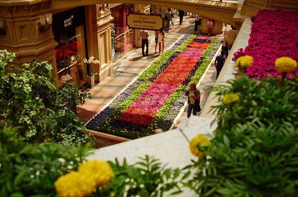 фестиваль цветов в москве