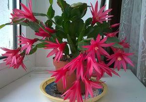 что цветет зимой - миниатюра