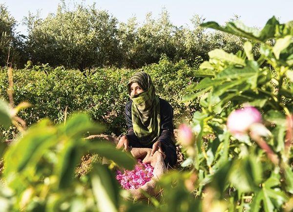 фестиваль роз в Марокко