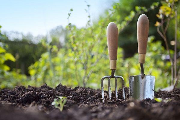 почва комнатных растений