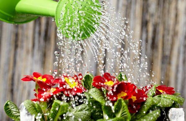 правильный полив растений