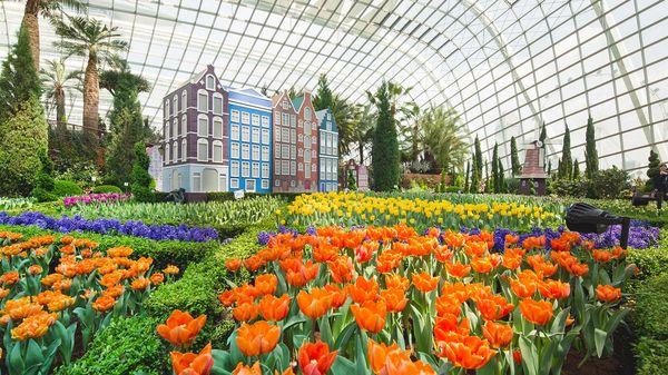 цветочный купол