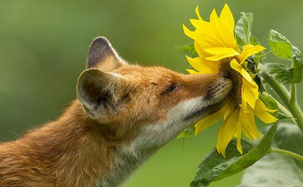 анекдоты про цветы
