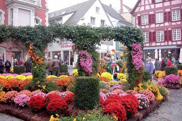 фестиваль хризантем в Германии