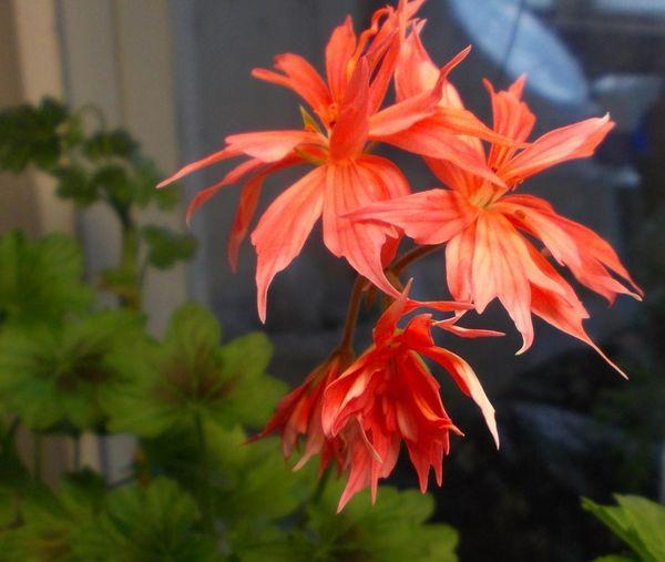 коллекция цветов Тамары Власовой