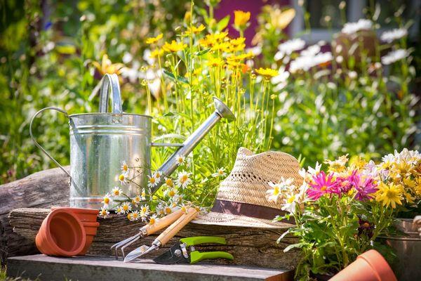 садовые болезни