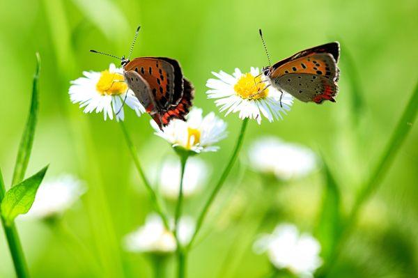 цветок счастья и любви