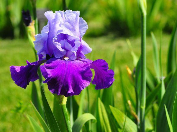 цветок символ любви