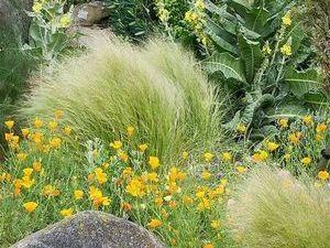 сад в засушливой зоне - миниатюра