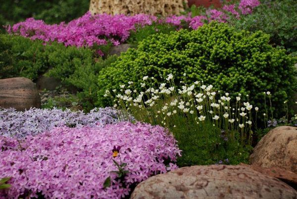 сад в засушливой зоне
