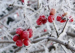 зимние работы в саду - миниатюра
