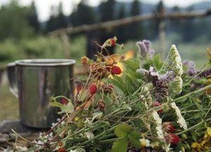 как собирать травы — миниатюра