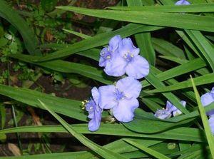 ночные цветы-миниатюра